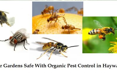 Keep Your Gardens Safe With Organic Pest Control in Haywards Heath