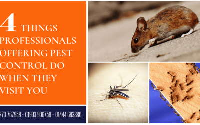 4 Things Professionals Offering Pest Control Do When They Visit You