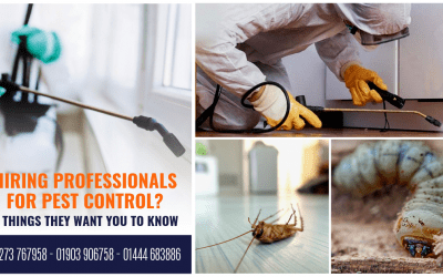 Hiring Professionals For Pest Control? 4 Things They Want You To Know