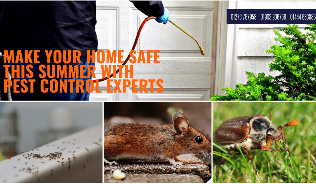 Make Your Home Safer This Summer With Pest Control in Horsham