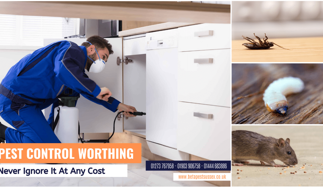 Importance Of Pest Control Worthing And Why You Cannot Ignore It At Any Cost