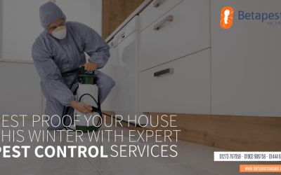 Pest Proof Your House This Winter With Expert Pest Control Services