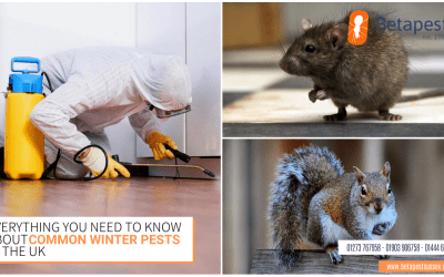 Everything You Need To Know About Common Winter Pests in The UK