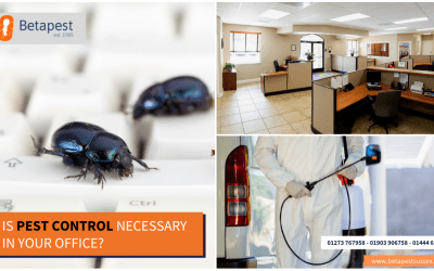 Is Pest Control Necessary in Your Office