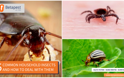 5 Common Household Insects And How To Deal With Them