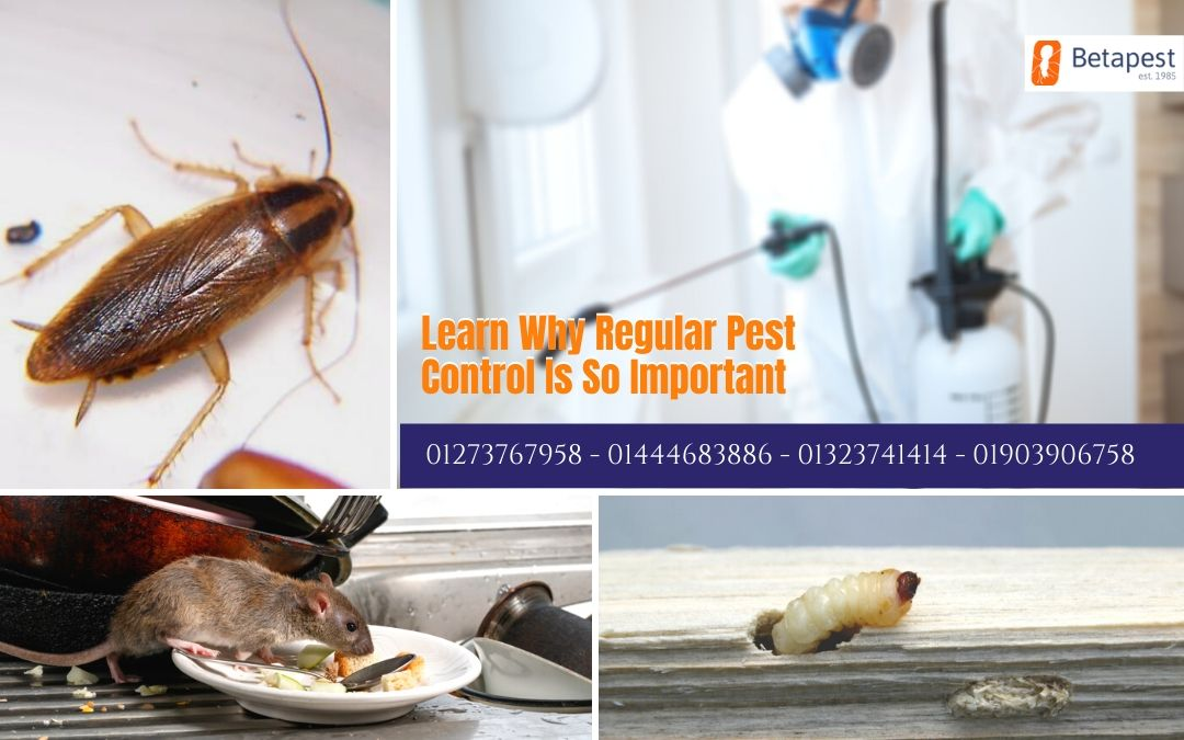 Learn Why Regular Pest Control Is So Important