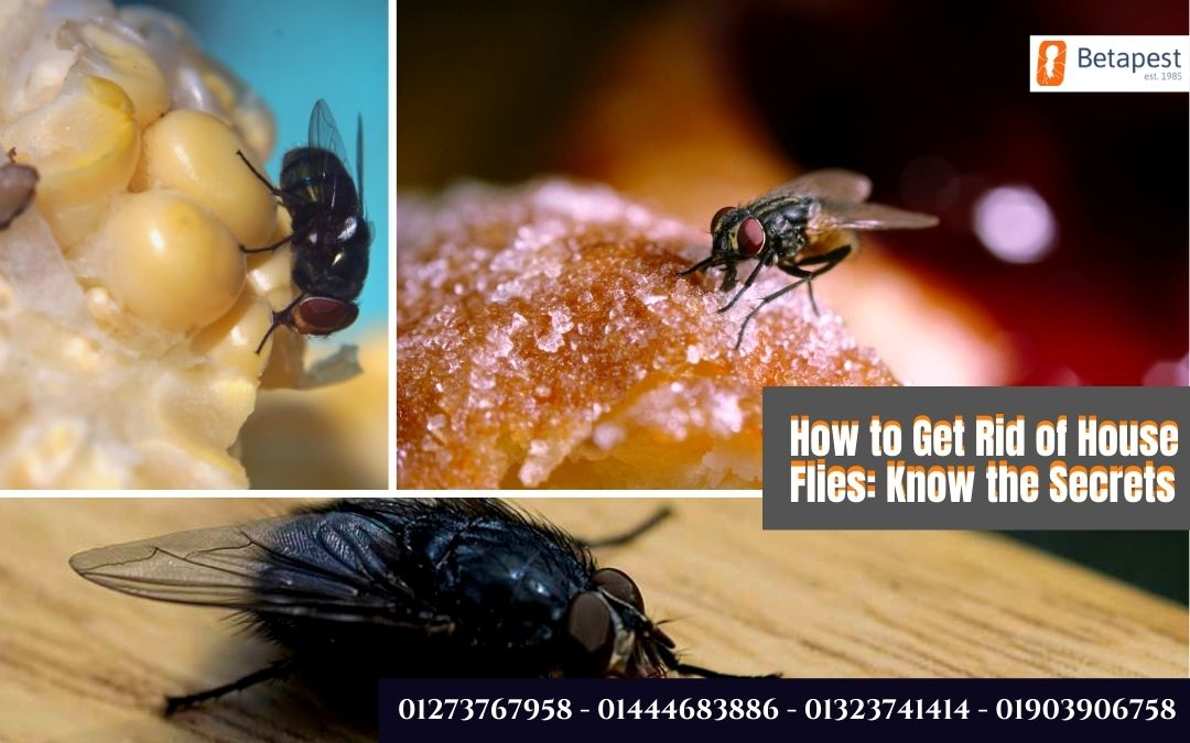 How to Get Rid of House Flies: Know the Secrets