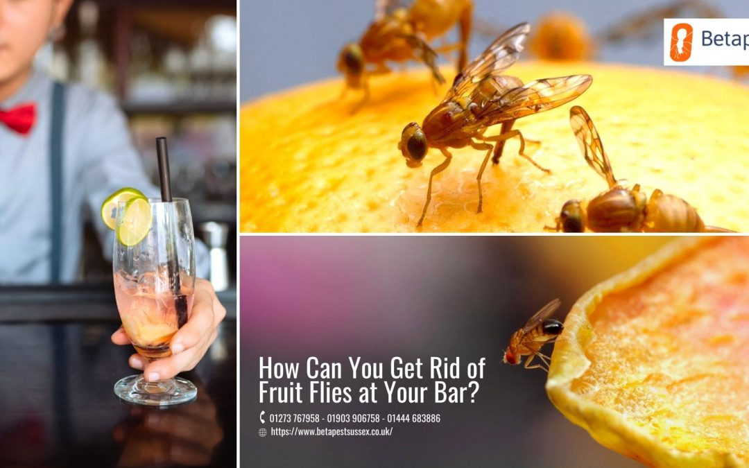 How Can You Get Rid of Fruit Flies at Your Bar?