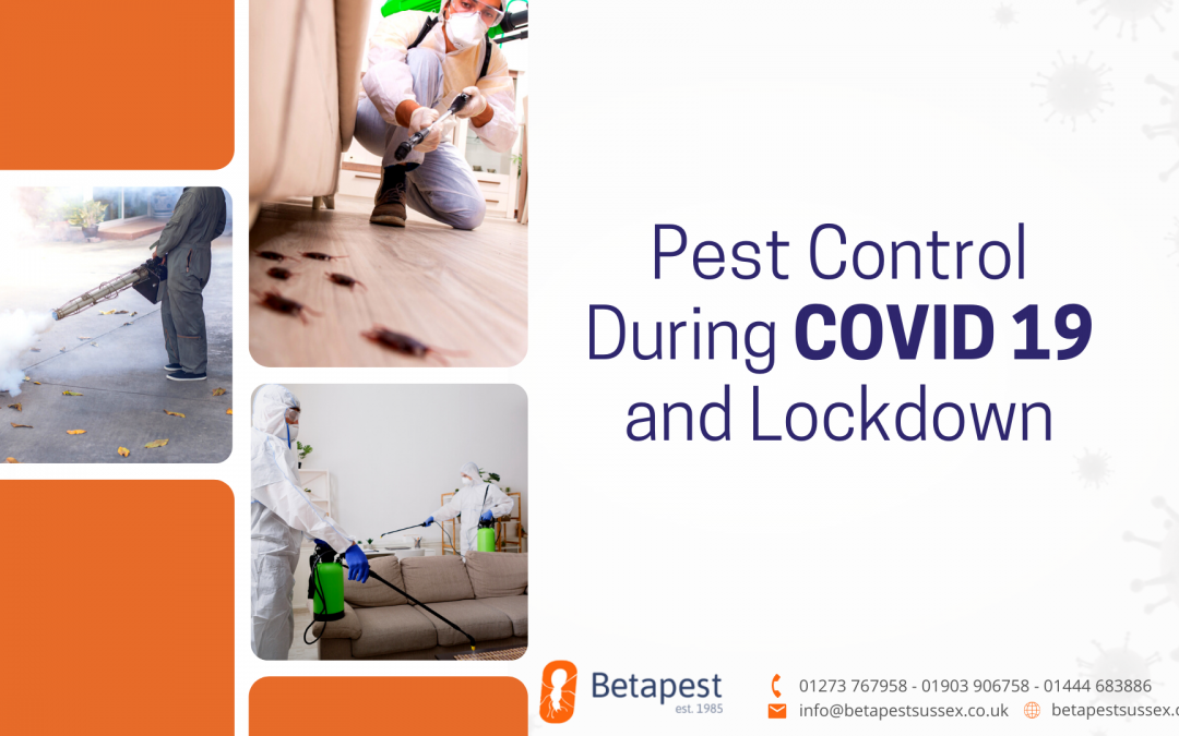 Pest Control During COVID 19 and Lockdown