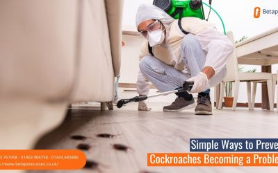 Simple Ways to Prevent Cockroaches Becoming a Problem