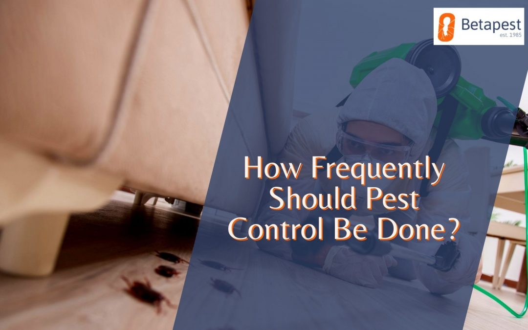 How Frequently Should Pest Control Be Done?