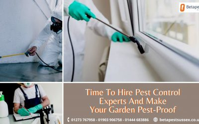 Time To Hire Pest Control Experts And Make Your Garden Pest-Proof