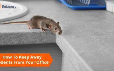 How To Keep Away Rodents From Your Office