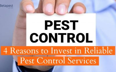 4 Reasons to Invest in Reliable Pest Control Services