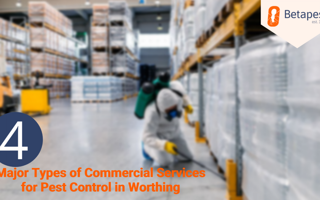 4 Major Types of Commercial Services for Pest Control in Worthing