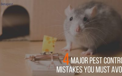 4 Major Pest Control Mistakes You Must Avoid