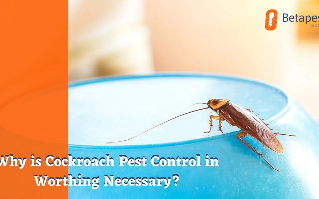 Why is Cockroach Pest Control in Worthing Necessary?