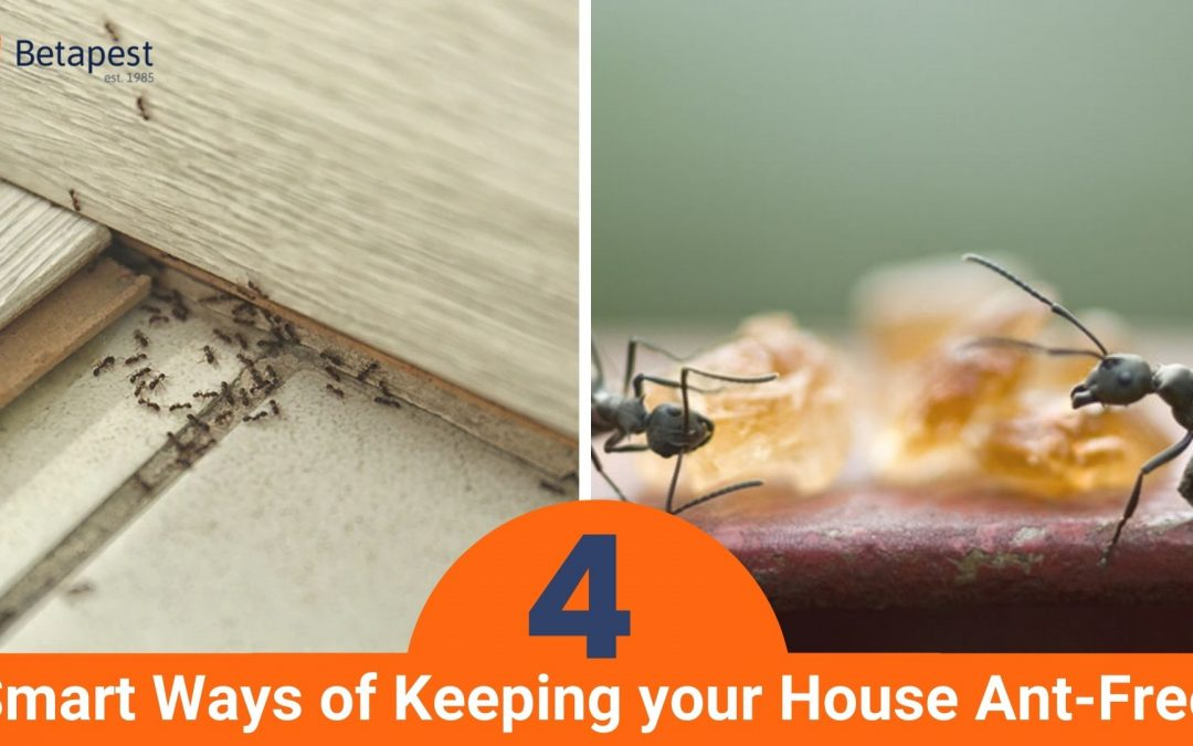 4 Smart Ways of Keeping your House Ant-Free